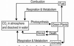 Explain Nitrogen And Carbon Cycle With Diagram