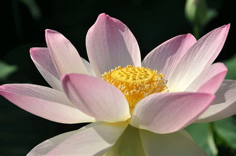 The Flowers Of Traditional Chinese Medicine