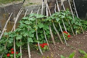 Comment Tuteurer Les Tomates : comment associer les l gumes au potager les conseils ~ Melissatoandfro.com Idées de Décoration