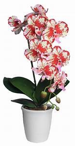 Grand Bac Pour Orchidées : grande orchid e en pot ~ Melissatoandfro.com Idées de Décoration