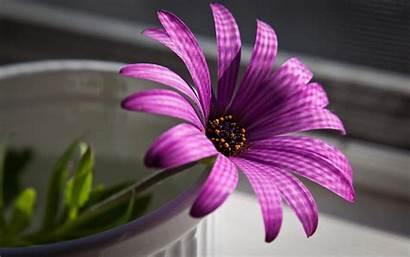 Purple Flowers Wallpapers Desktop Cave