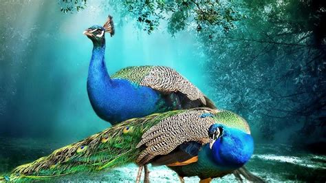 Animal Screensavers Wallpaper - the most beautiful hd animal wallpaper in the world