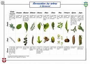 Comment Affuter Un Foret : comment reconnaitre arbre classe pinterest comment ~ Dailycaller-alerts.com Idées de Décoration
