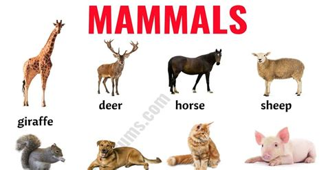 Mammals: List of Mammals in English with ESL Picture