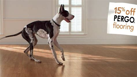 pergo flooring with dogs top 28 pergo flooring with dogs how to choose hardwood or laminate flooring types pergo