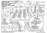 Colouring Pages Green Educational Moss Gardening Potato Week Children Contacted Telling Mark Books sketch template