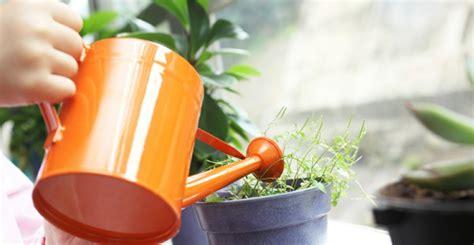 Topfpflanzen Giessen Und Richtig Pflegen by Topfpflanzen Und Die Notwendige Fr 252 Hlingspflege