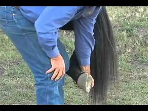 Parelli Natural Horse Training Tip