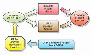 Dipeptidyl peptidase-4 inhibitor - Wikipedia