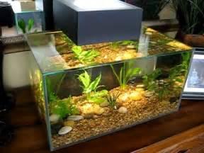 Fluval Edge fish tank week 2 Neon Tetra just added