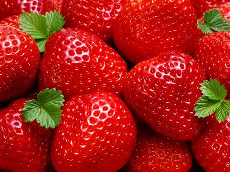 Fresh Photo Hd by Fresh Strawberries Photography Hd Wallpapers Desktop