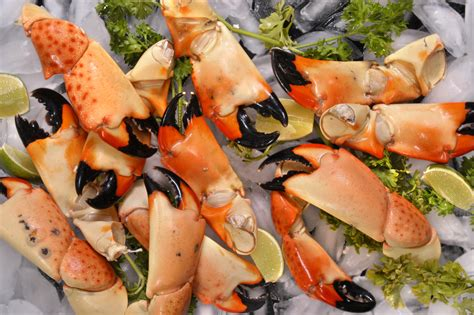 stone crabs florida catch crab claws ice fishing popular visitflorida september steamed