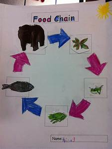 Primary Esol  Food Chain
