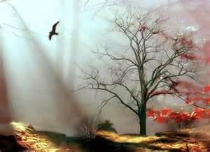 Tree Mystical Landscapes