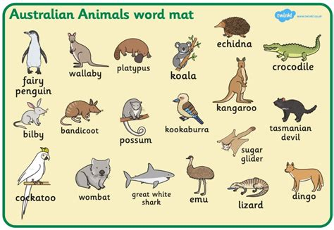 Year 2 Australian Animal Research Broad Heath Primary School