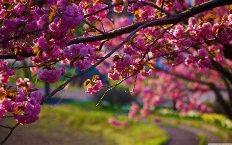Hd Spring Wallpapers For Desktop  Wallpaper Cave