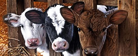 three 39 s a crowd stretched canvas wall poster print cow farm barn calf prints