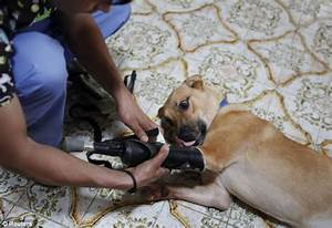 Dog who had its front paws cut off by Mexican drug gang is ...