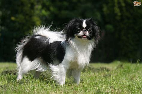 amazing  breeds  dog petshomes