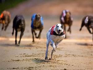 state florida racing greyhounds test positive for