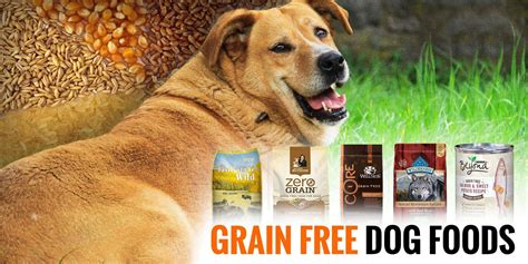 5 Best Grain-free Dog Foods