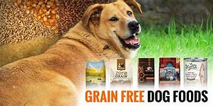 5 Best Grain Free Dog Foods Reviews and Buying Guide
