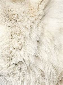 Second Life Marketplace - 9 wolf fur textures