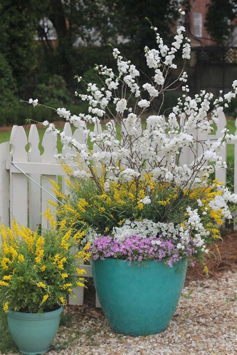 easter inspired container garden  spring  sweet