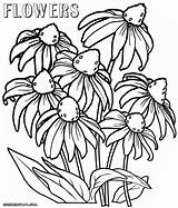 Flower Coloring Flowers Pages Colorings Wild Coloringway sketch template