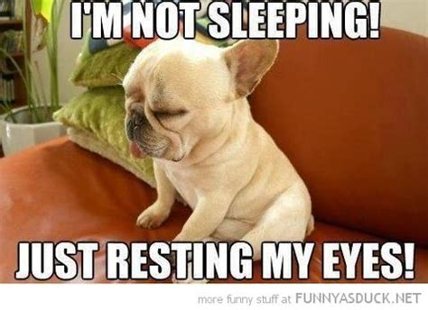 Tired Dog Meme - dog meme monday funny dog meme bullwrinkles dog blog mondays bullwrinkles usa