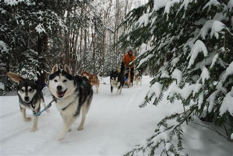 File:Dogsledding at Haliburton Forest.jpg - Wikipedia