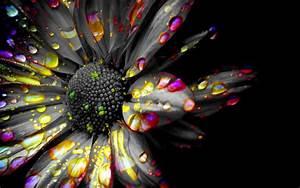 Kelsie Ross (Art Class Blog): Black and White Spot Color ...