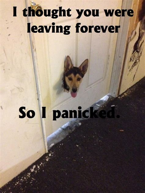 thought   leaving    panicked jpegy