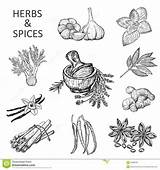 Spices Herbs Coloring Pages Printable Sketch Sugar sketch template