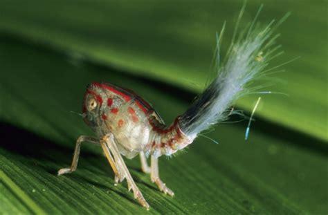 insetto nero volante curiosit 224 animali insetti incredibili focus