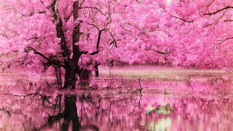 Amazing Pink Background Images  Design Trends Premium