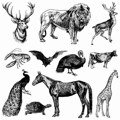 Coloring Animals Pages Representation Adults Adult Animal