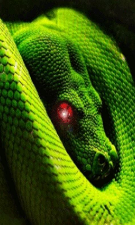Animated Snake Wallpaper - moving snake live wallpaper ca appstore for android