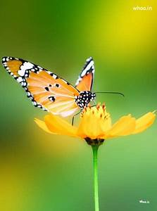 Natural Butterfly Image For Mobile