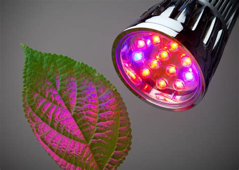 5 best led grow lights for indoor gardening projects