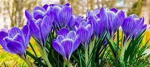 Garten Im März : der garten im m rz kgv hammonia ~ Lizthompson.info Haus und Dekorationen