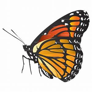 Butterfly clipart side - Pencil and in color butterfly ...