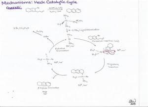 Ashley U0026 39 S Biology Study Guides