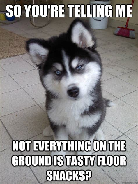 Hyper Dog Meme - hyper dogs on quotes quotesgram