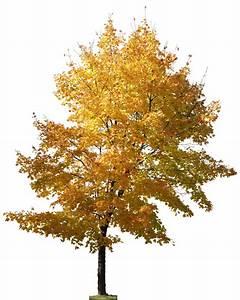 PNG素材 树设计图 景观设计 环境设计 设计图库 昵图网nipic