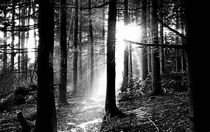 Forest Nature Wallpapers Scenes Dark Desktop Backgrounds