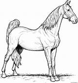 Coloring Horse Pages Mare Printable sketch template