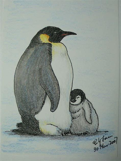 emperor penguin color pencil drawing  photo  flickriver