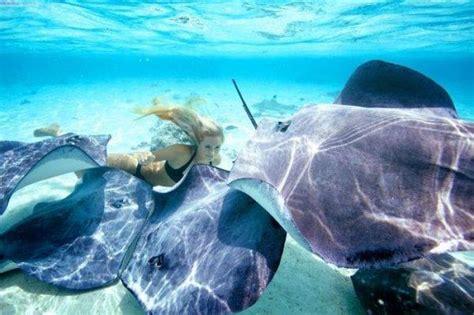 Trauslā blondīne un plēsīgā baltā haizivs - Spoki