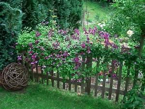 Immergrüne Kletterpflanze Für Zaun : kletterpflanzen f r zaun und rankgitter page 2 mein ~ Michelbontemps.com Haus und Dekorationen